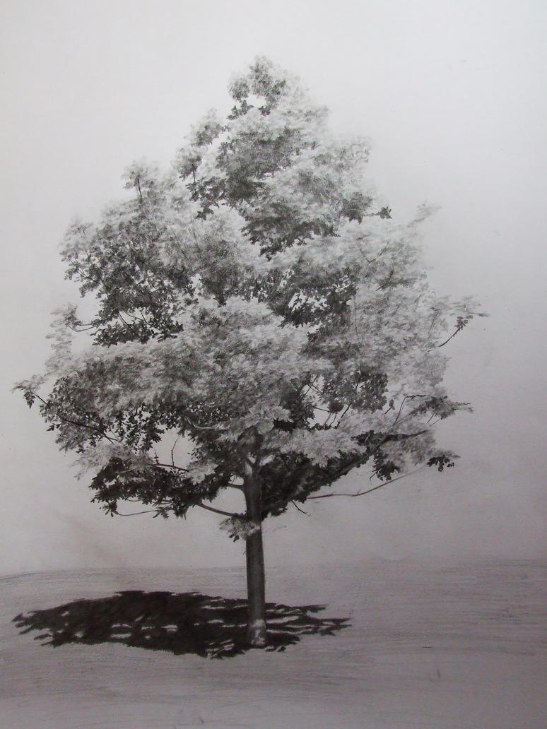 Tree study by ladyLawenda