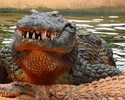 Crocodile Farm8 by catchaca