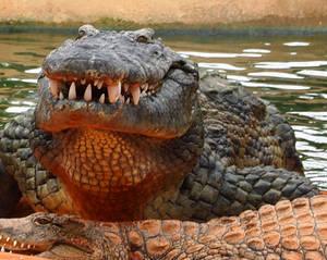 Crocodile Farm8