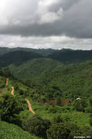 Jungles of Northern Thailand by distemper