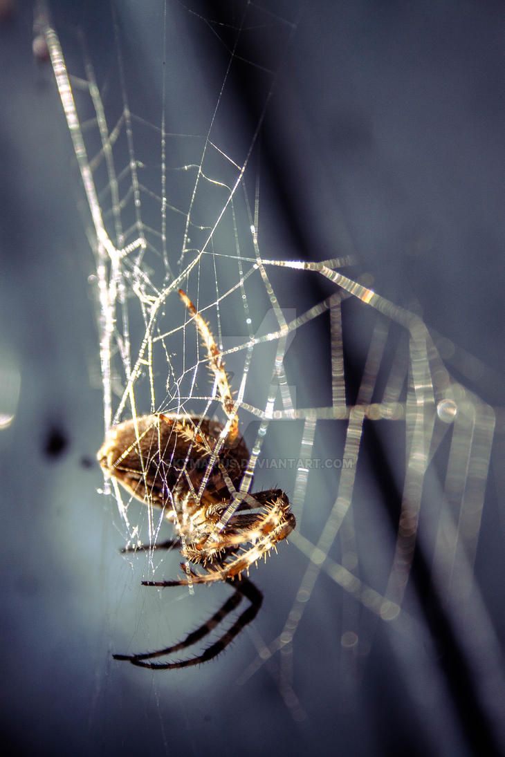 Cross Spider by SkyMarius