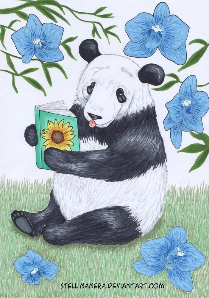 Panda chan