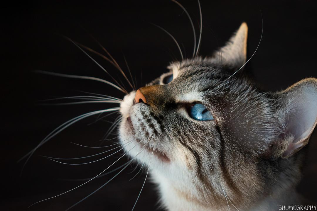 Pifu the Cat