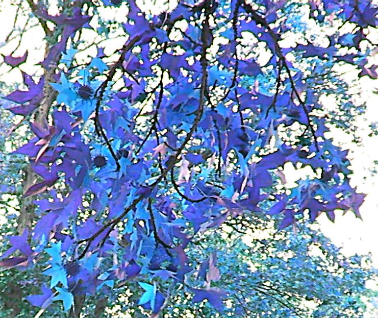 Plavo kao ... - Page 2 Blue_tree_by_doggil67