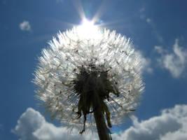 against the sun by Celebryane