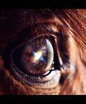 Goodbye Horses by cchomikk