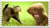 Domo vs. Cat by bubblymilktea
