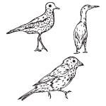 Vector Birds Set 50 by cristina012