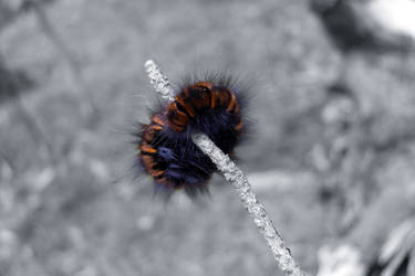 FURRY LARVA by sHavYpus