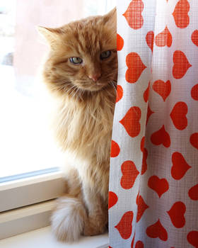 furball curtain - published in newspaper