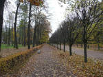 Autumn colors in St Petersburg