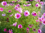 Gentle field flowers for Sara - update
