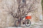 The Biketree in old Acre