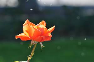 Flower by Rikitza