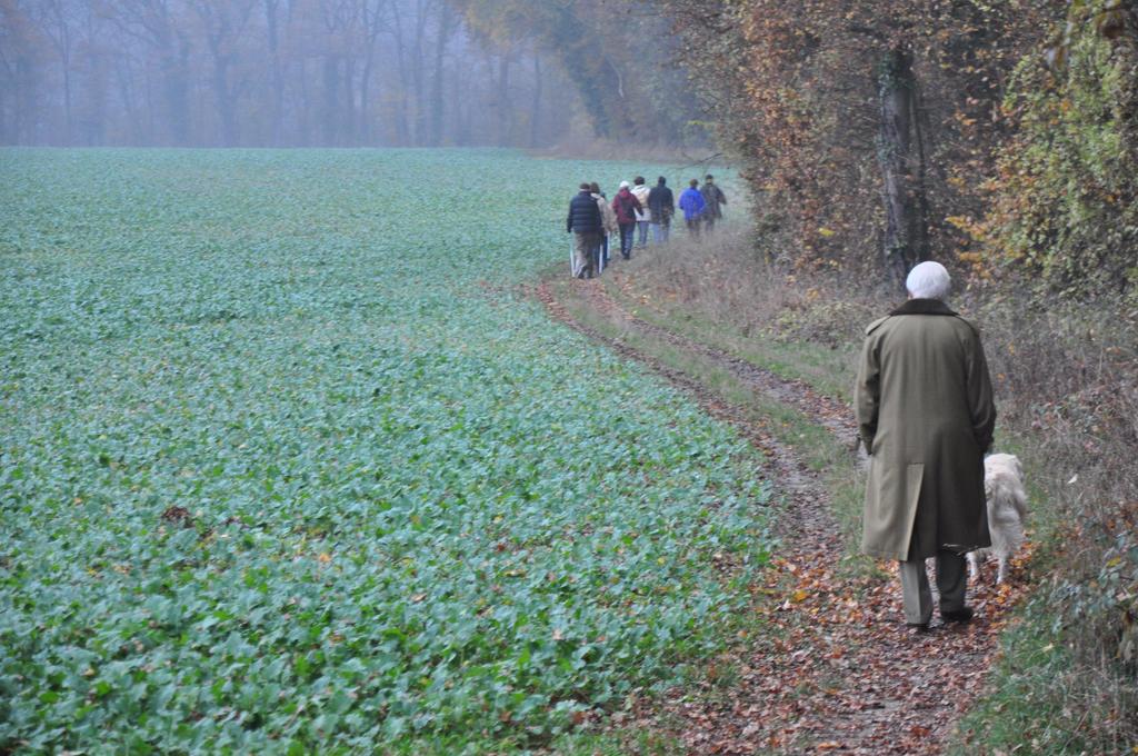 towards the fog - to my friend Lucia-Paula by Rikitza