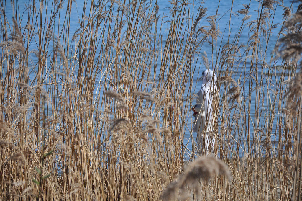 Through the Reed