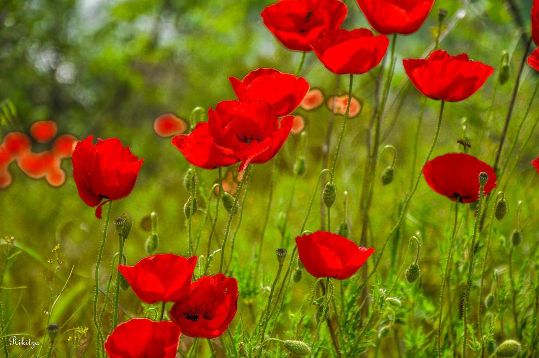 flowers in Greece by Rikitza