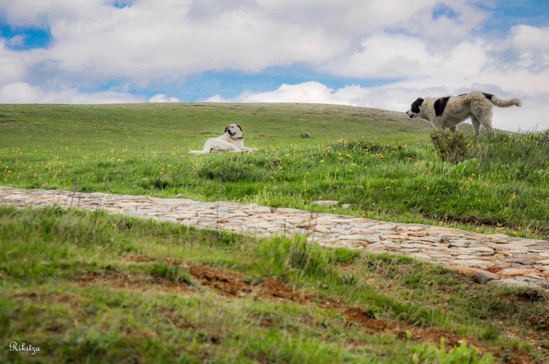 pastoral ambiance in Greece by Rikitza