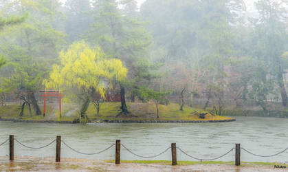 Fog In Rainy Day by Rikitza