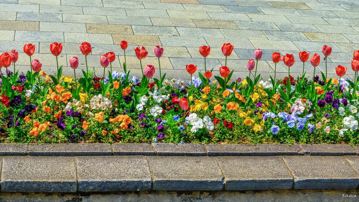 Flower arrangement on Tokyo street by Rikitza