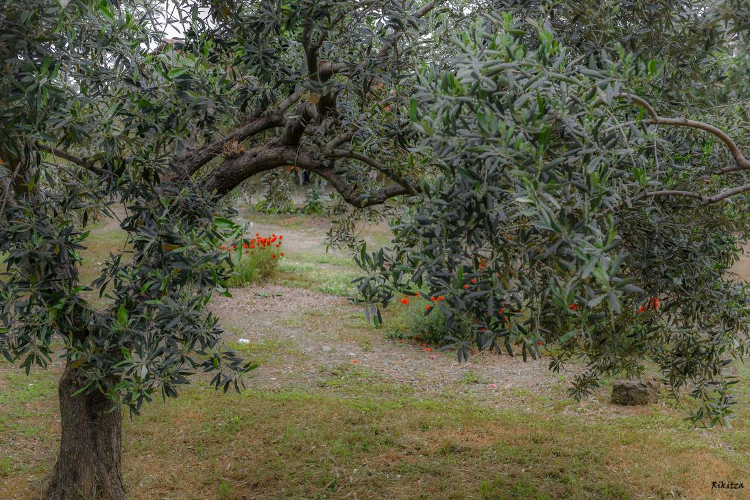 Mainly Olive Tree by Rikitza