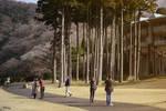 golden time at Hakone