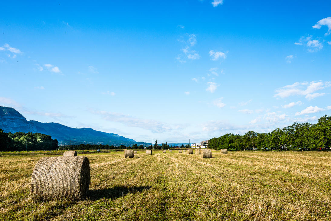 fields at Vessy by Rikitza