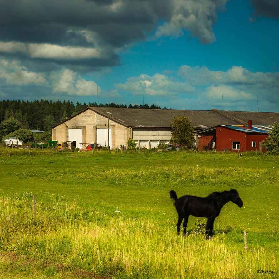 Black Horse by Rikitza