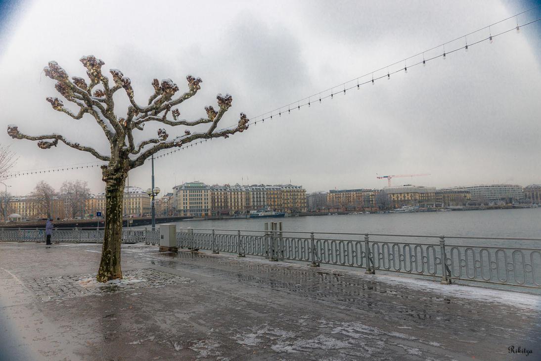Tree At The Lake by Rikitza