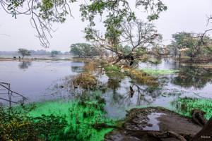 Incredible India - natural reservation by Rikitza