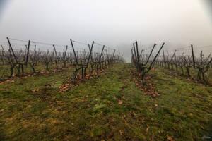 Geneva city - foggy wine yard by Rikitza