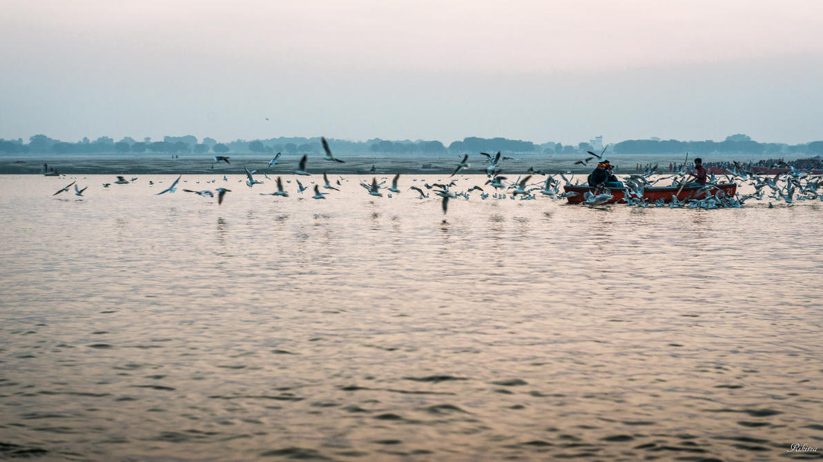 incredible India - birds and the Ganges by Rikitza