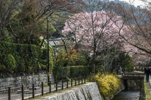 land of rising sun - view near Kyoto by Rikitza