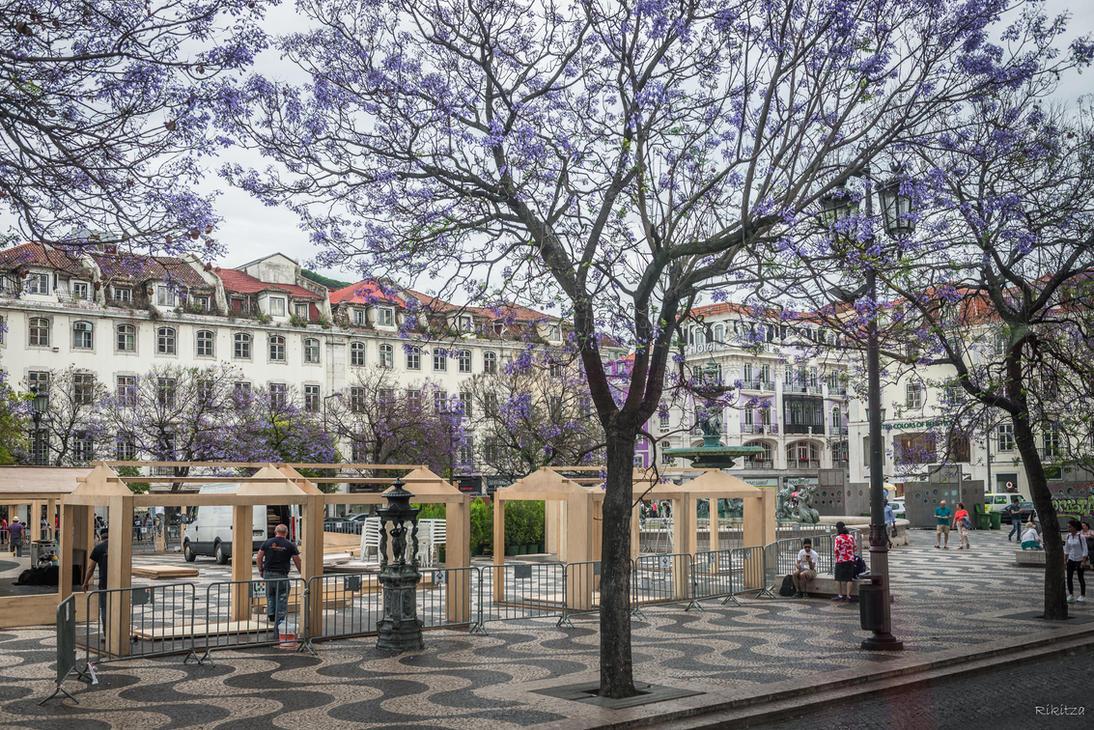 sweet Portugal - flourishing Lisboa by Rikitza