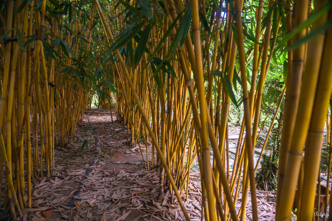 Good morning Vietnam - the reed way by Rikitza