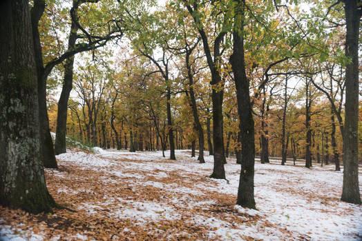 Heroic Serbia - Winter scene at Topola