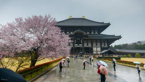 rainy sakura at Nara by Rikitza