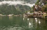 great taste Austria - swan fleet