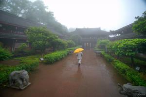 surprising China -yellow umbrella and elephants
