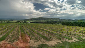 tasting wine - on the fly in Provence