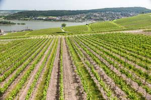 along the Rhein - green perspective