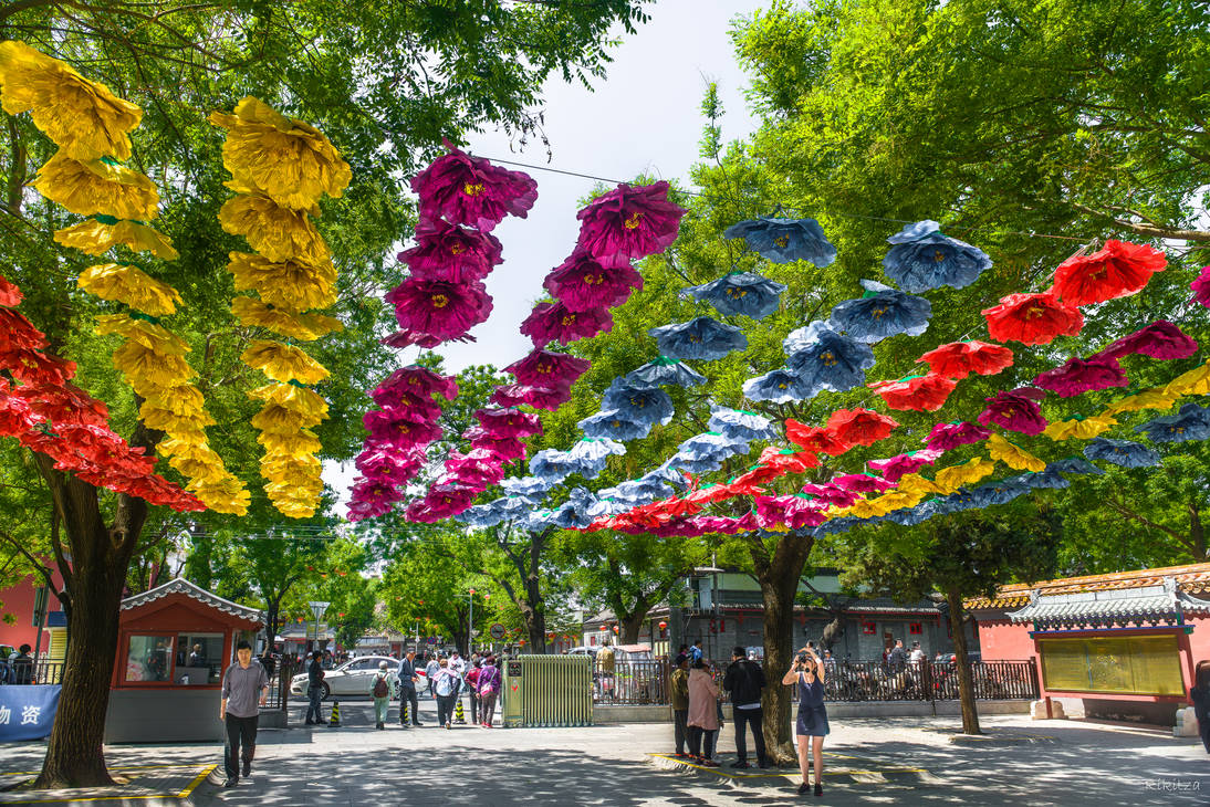 Surprising China - shadow in Beijing park
