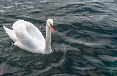 elegance on the Geneva lake by Rikitza