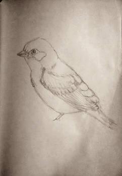 I'm like a bird...