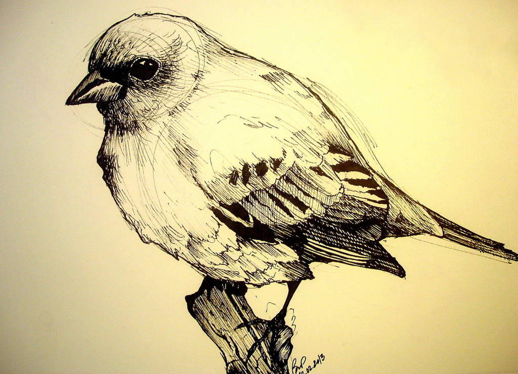 Bird Study by Kallopsia
