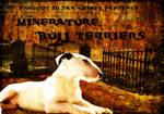 Minature Bull Terrier Manip