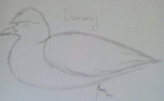 Sammy the herring gull