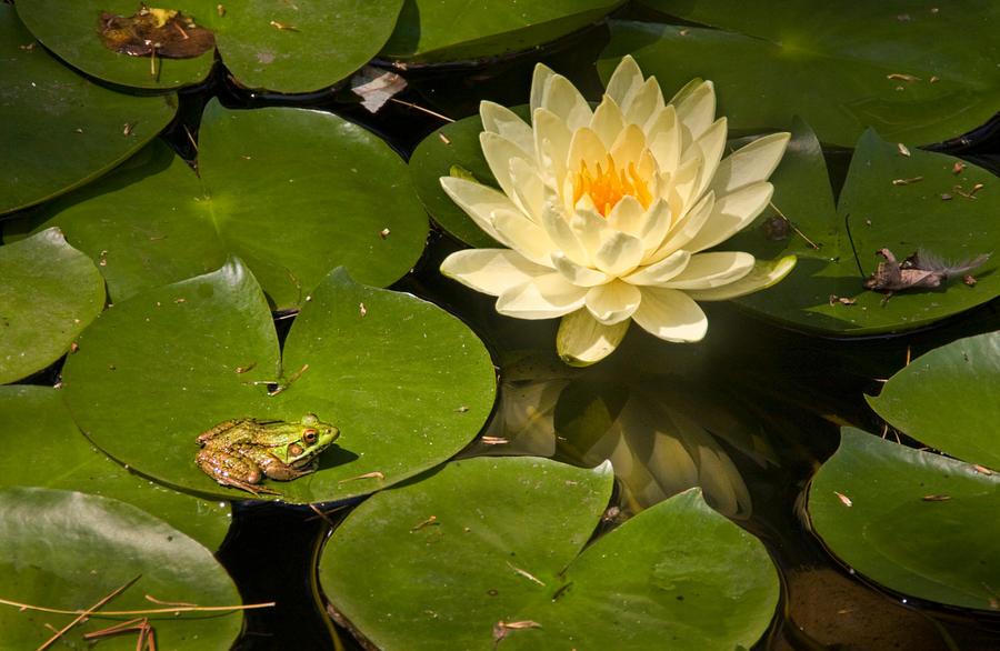 Frog Pond By Muffet1 On Deviantart