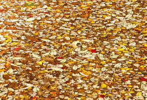 Leaves on Water by muffet1