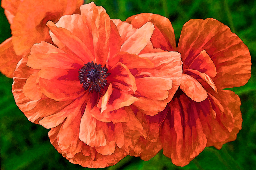 Poppy Painting by muffet1